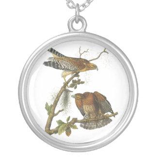 Rojo-llevó a hombros el halcón, Juan Audubon Collar Plateado