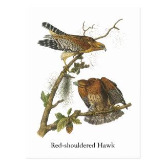 Rojo-llevó a hombros el halcón, Juan Audubon Tarjeta Postal