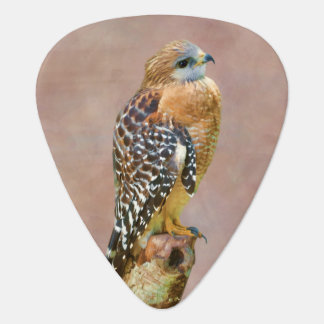 Rojo-Llevó a hombros el halcón Uñeta De Guitarra