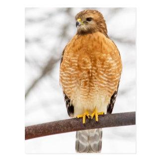Rojo-Llevó a hombros el halcón Postal