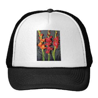 Rojo, naranja y flores del gladiolo del escarlata gorros