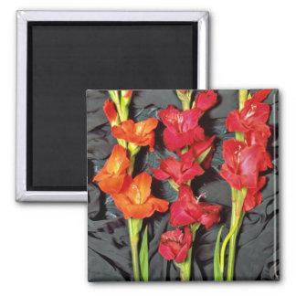 Rojo, naranja y flores del gladiolo del escarlata imán de nevera