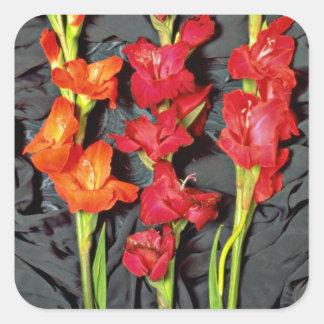 Rojo, naranja y flores del gladiolo del escarlata pegatina cuadrada
