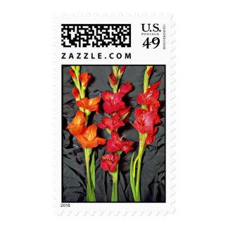 Rojo, naranja y flores del gladiolo del escarlata sellos