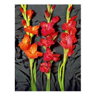 Rojo, naranja y flores del gladiolo del escarlata postales