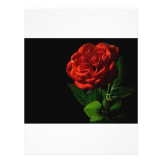"""rojo-rosa-macro-aún-imagen-estudio-foto folleto 8.5"""" x 11"""""""