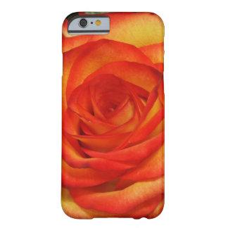 Rojo vibrante y foto macra subió melocotón funda de iPhone 6 barely there