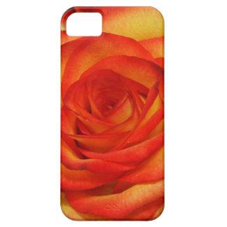 Rojo vibrante y foto macra subió melocotón funda para iPhone 5 barely there