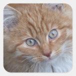 Rojo y blanco, de pelo largo, cara del gato de colcomanias cuadradases