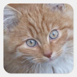 Rojo y blanco, de pelo largo, cara del gato de pegatina cuadrada