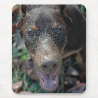 Rojo y perrito del Doberman del moho Tapetes De Raton