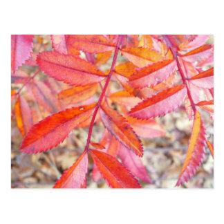 Rojo y postal anaranjada de las hojas - orilla de