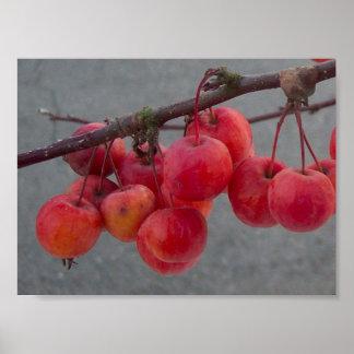 Rojos del invierno posters