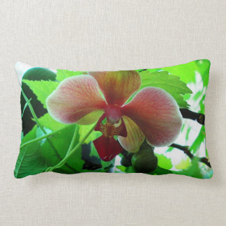 Roll Pillow Pink Phalaenopsis Orchid photograph