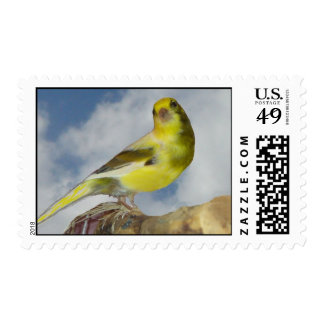 Roller canary postage stamp