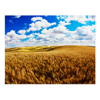Rolling Hills del trigo maduro Postal