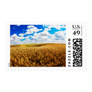Rolling hills of ripe wheat postage