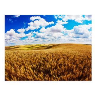 Rolling hills of ripe wheat postcard