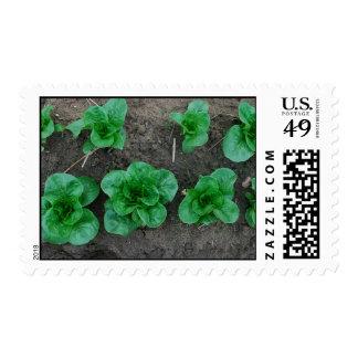 Romaine francés sellos postales