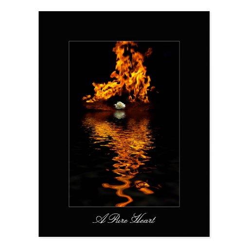 Romance de la flor del fuego y del rosa blanco postales