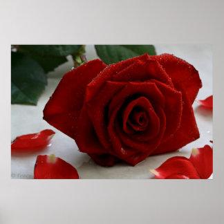 Romancing Rose Poster