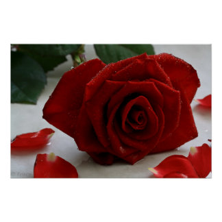 Romancing Rose Posters