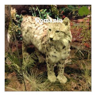 Romania Lynx 5.25x5.25 Square Paper Invitation Card
