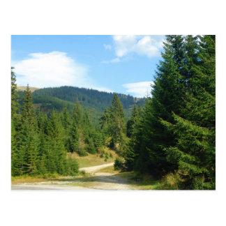 Romania, Moldova, among the pine forests Postcard