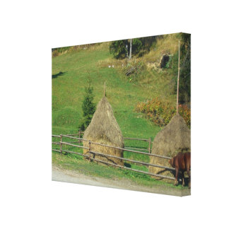 Romania, Moldova, Ehaystacks for the animals Canvas Print