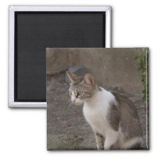 Romania, Transylvania, Sighisoara. Pet cat. 2 Inch Square Magnet