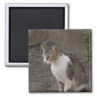 Romania, Transylvania, Sighisoara. Pet cat. Magnet