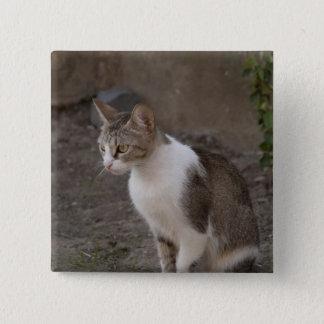 Romania, Transylvania, Sighisoara. Pet cat. Pinback Button