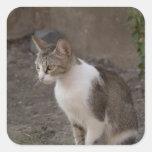 Romania, Transylvania, Sighisoara. Pet cat. Square Sticker
