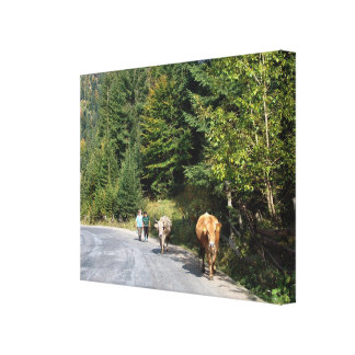 Romania, Walking the cows Canvas Print