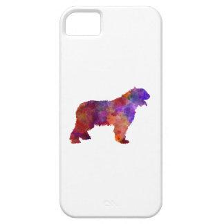 Romanian Mioritic Shepherd Dog iPhone SE/5/5s Case