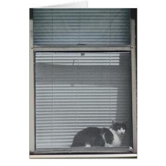 Romans 8:29 Cat in Window Card