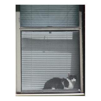 Romans 8:29 Cat in Window Postcard