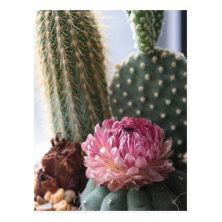Romans 8:37 Cactus Postcard
