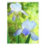 Romantic Blue Irises Postcard
