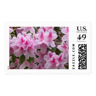Romantic Elegant Pink Azalea Blossoms Postage Stamps