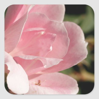 Romantic Pastel Pink Rose Square Sticker