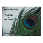 Romantic Peacock Feathers Save the Date Post Card