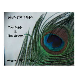 Romantic Peacock Feathers Save the Date Postcard
