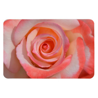Romantic Pink and White Rose Magnet