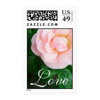 Romantic pink rose Love Wedding or Valentine Postage Stamp
