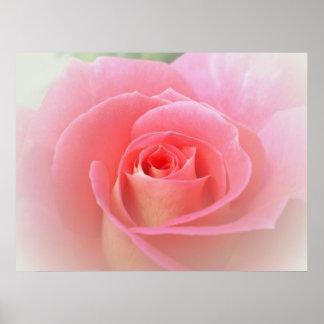 Romantic Pink Rose Print
