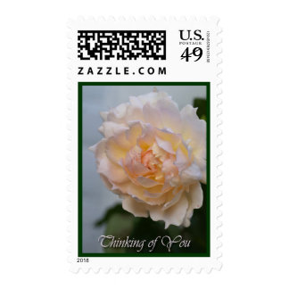 Romantic pink Rose & Thinking of you text Stamp