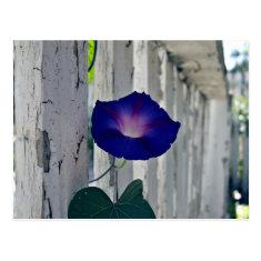 Romantic purple flowers post card