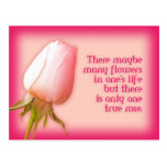Romantic quote only one rose postcard