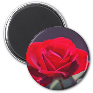 Romantic red rose and meaning magnet